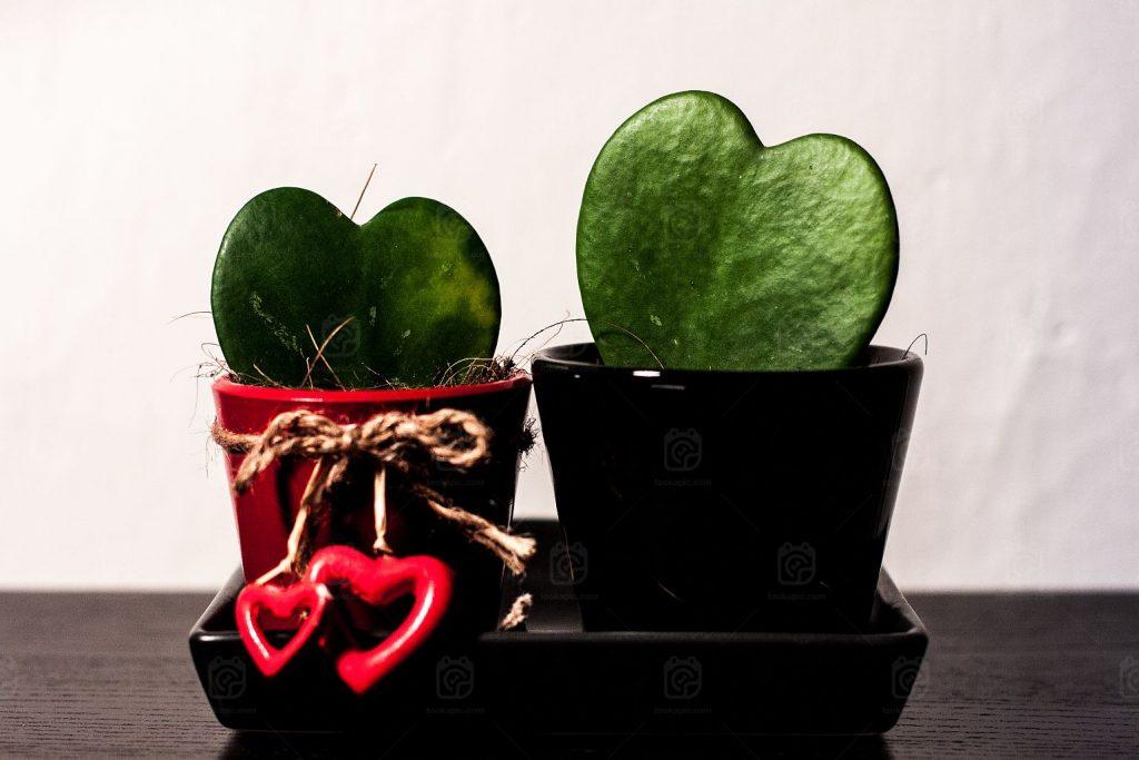 Feng Shui Para o Amor