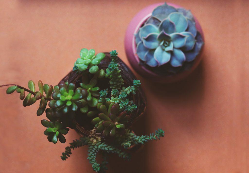 7 Motivos Para Teres Plantas em Casa